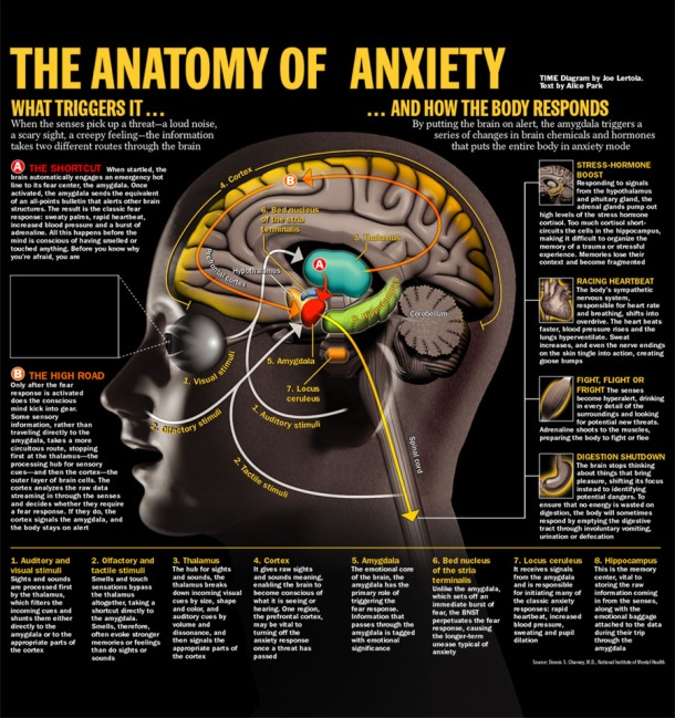 anatomy-of-anxiety