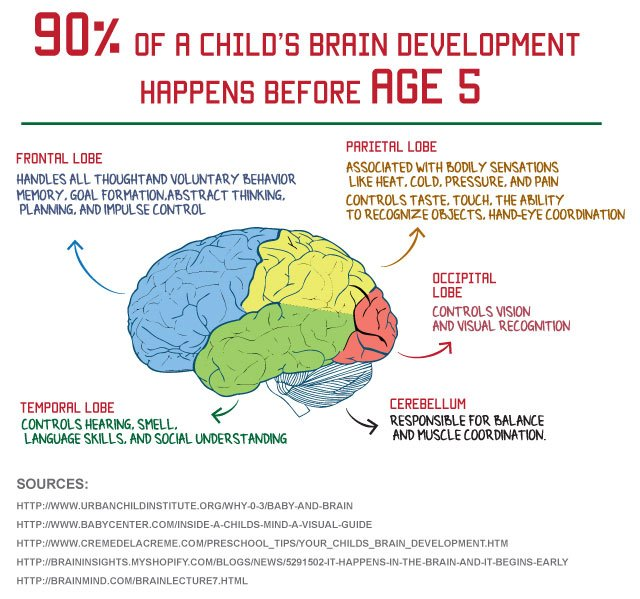 Brain Cell Development Differs In Those >> Brain Resources Direct