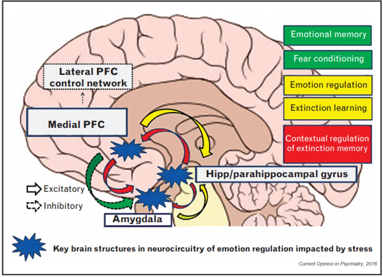 Anxiety and Brain | direct
